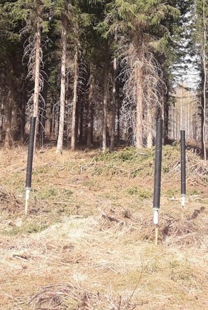 Kuva 1. Kirjanpainajien feromoniseurannassa käytetty pyydystyyppi. Yhdelle pyyntipaikalle asetetaan kolme pyydystä kolmion muotoon. Kuva: Luonnonvarakeskus.